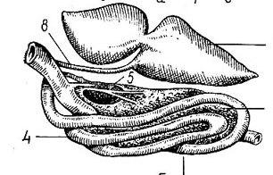 Статьи, очерки, размышления о карпах кои - Копия iht-p-073.jpg