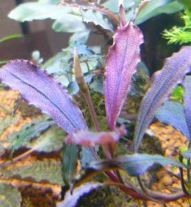 Продам излишки растений - 2813.jpg