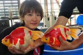 Есть такие рыбки Сабао и Тамасаба - images.jpg