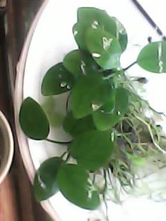 растения - DSC_0000071.jpg