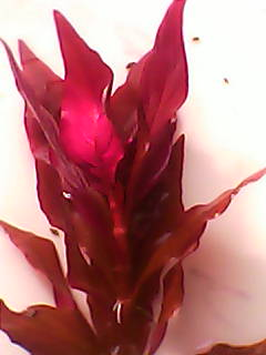 растения - DSC_0000095.jpg