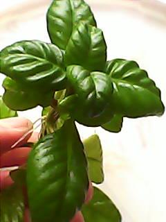 растения - DSC_0000090.jpg