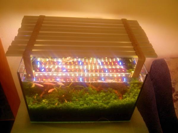 Светодиоды в растительном аквариуме. Испытано на себе и не.. - IMG_20150609_183157.jpg
