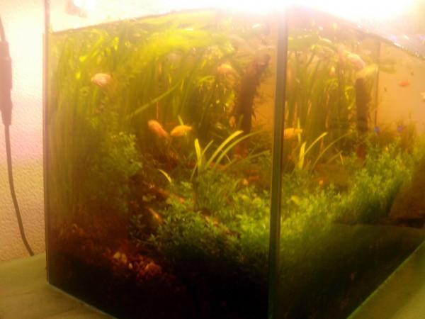 Светодиоды в растительном аквариуме. Испытано на себе и не.. - IMG_20150609_182738.jpg