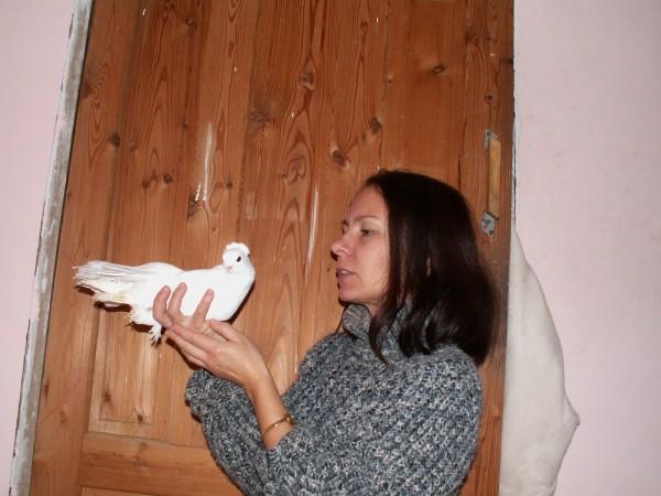 статный голубок - PICT3005.JPG