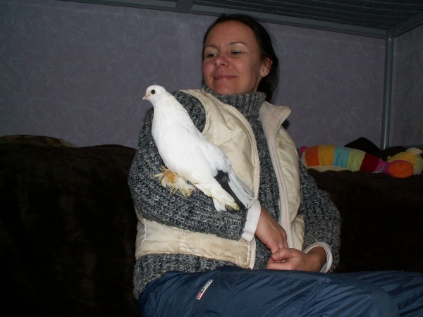 Кто нибудь голубей держит? - PICT3032.JPG