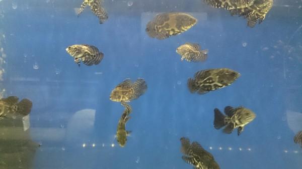 Ищу (хочу) рыбок - DSC_1208.JPG