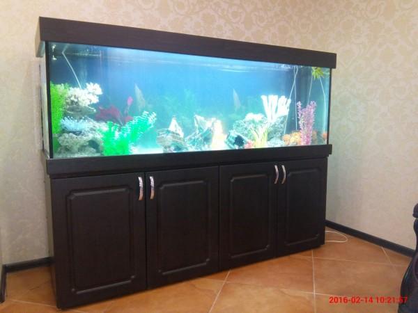 Новые серии аквариумов ЯрГласс. - IMG_20160214_102157.jpg