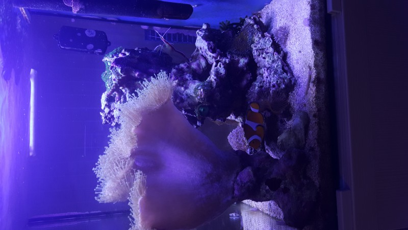 Все про морской аквариум - tmp_3154-20160308_212815674262776.jpg