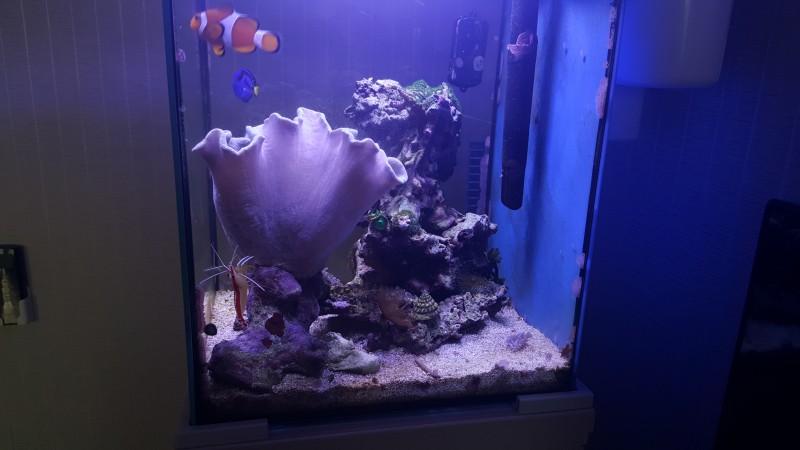 Все про морской аквариум - tmp_22578-20160309_0738442086708310.jpg