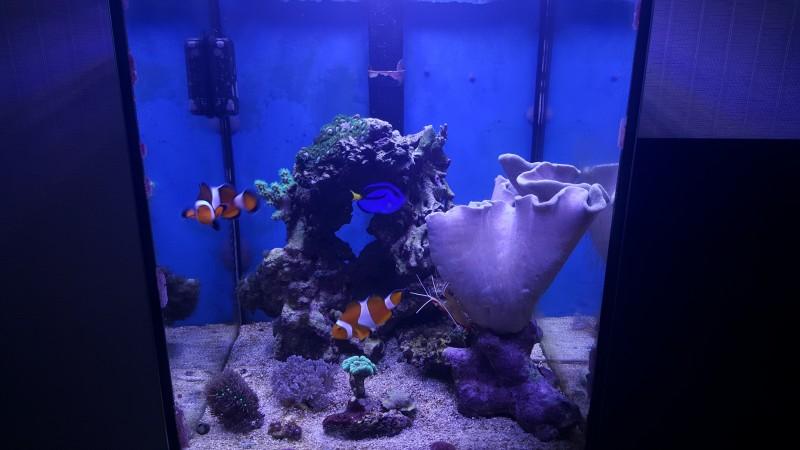 Все про морской аквариум - tmp_22578-20160309_073824-1073635287.jpg