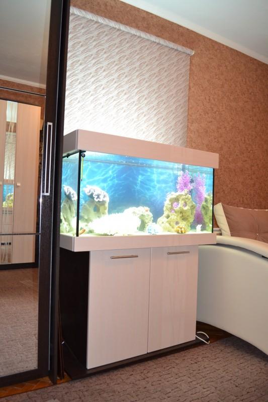 Новые серии аквариумов ЯрГласс. - DSC_1235.jpg