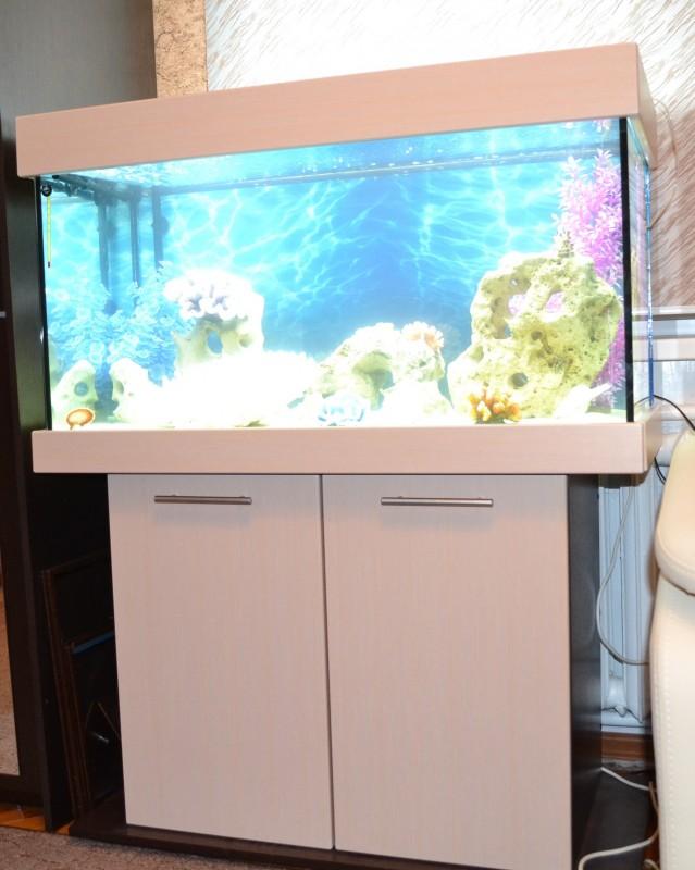 Новые серии аквариумов ЯрГласс. - DSC_1230.jpg