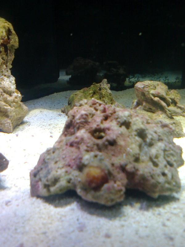 Все про морской аквариум - фото0268.jpg