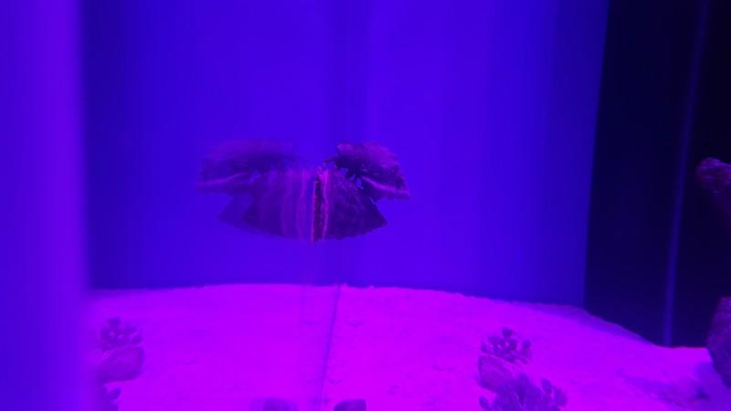 Мое море 200л 65х55х60 оптивайт 12 мм - 20160413_074114.jpg
