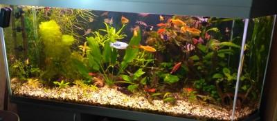 15 лет спустя или снова аквариум - IMG_20160826_141635.jpg