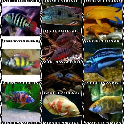 Большой ассортимент  Аквариумных рыбок - img1473880180513.jpg