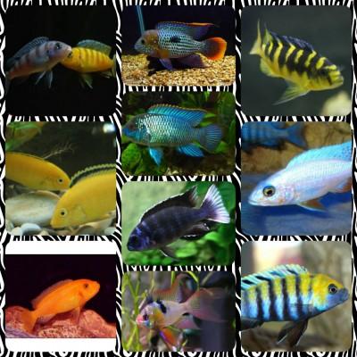 Большой ассортимент  Аквариумных рыбок - img1473879968673.jpg