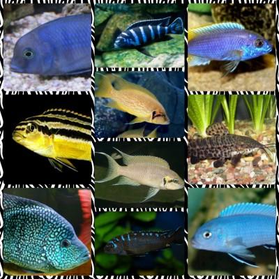 Большой ассортимент  Аквариумных рыбок - img1473879805646.jpg