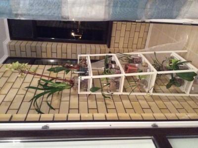 Мои орхидеи - image.jpg