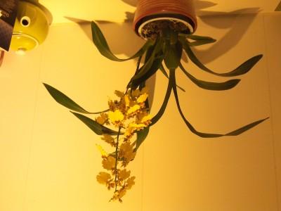 Мои орхидеи - 2016-10-21 20.06.40.jpg