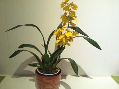 Мои орхидеи - 2016-10-21 20.10.59.jpg