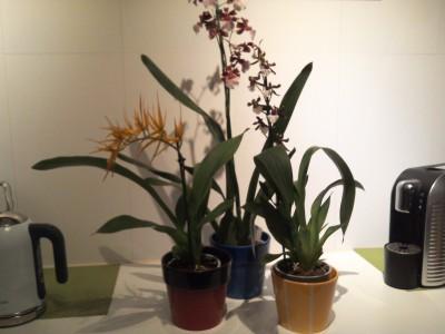 Мои орхидеи - 2016-10-21 20.16.11.jpg