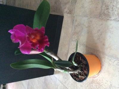 Мои орхидеи - image.jpeg