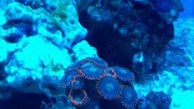 Море,море!!! - image-0-02-05-e6bb0114b5f1862d41e6d8b90feab125323b410443920fdf90de41cd891f98dd-V.jpg