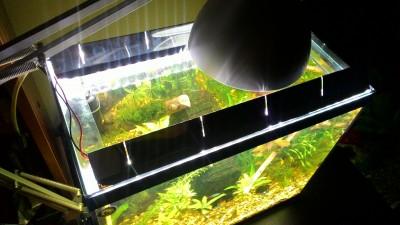 Светодиоды в растительном аквариуме. Испытано на себе и не.. - P_20161116_232936.jpg