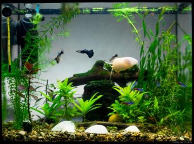 Светодиоды в растительном аквариуме. Испытано на себе и не.. - VK-0895.jpg