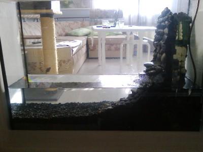 аквариум в нише. - фото0449.jpg