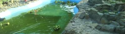 Пруд, просто пруд. - DSC00148 кр вода.jpg
