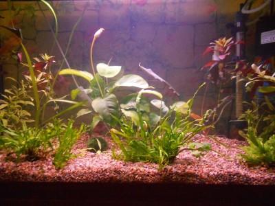 Мой первый аквариум 100 литров!!! - 017.JPG