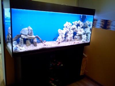 Продам аквариум с цихлидами - IMG_20170531_185536.jpg