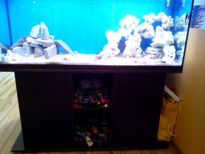 Продам аквариум с цихлидами - IMG_20170531_185546.jpg