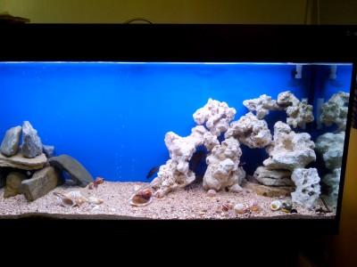 Продам аквариум с цихлидами - IMG_20170531_185555.jpg