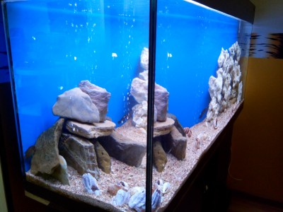 Продам аквариум с цихлидами - IMG_20170531_185603.jpg