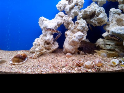 Продам аквариум с цихлидами - IMG_20170531_194757.jpg