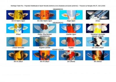 Кои: породы и термины нашего хобби - 16939668_688734241331299_8897993510013321567_n.jpg