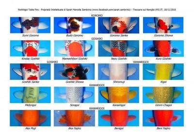 Кои: породы и термины нашего хобби - 16998122_688734117997978_8468194553500600758_n.jpg