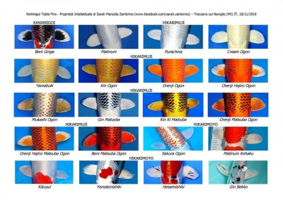 Кои: породы и термины нашего хобби - 17022462_688734224664634_3269021781924175274_n.jpg