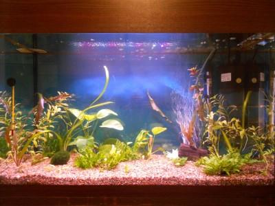 Мой первый аквариум 100 литров!!! - 010.JPG