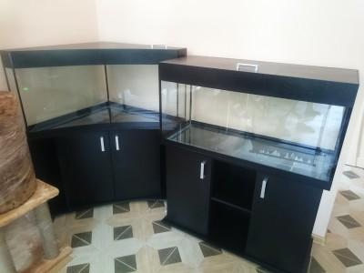 г.Армавир зоомагазин ХХХ - аквариум угловой 1.jpg