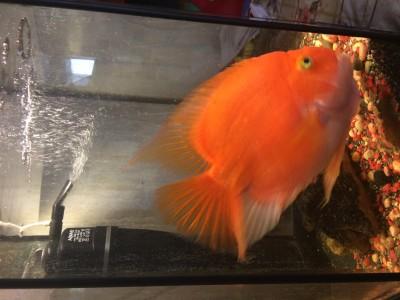 Новый аквариум 200л. Какой фильтр купить. - IMG_0382.JPG