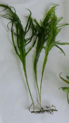 Продам излишки растений - 2355778.jpg