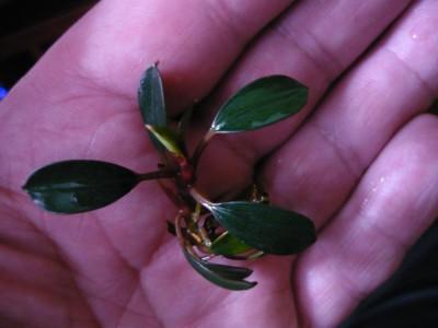 Продам излишки растений - post-1163-0-82595900-1467796748.jpg