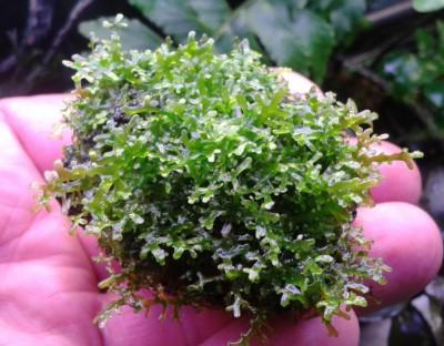 Продам излишки растений - 60414121931.jpg