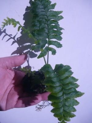 Продам излишки растений - 253667568.jpg