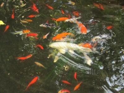 Мини аква-пруд (Адлер) - IMG_0865....jpg